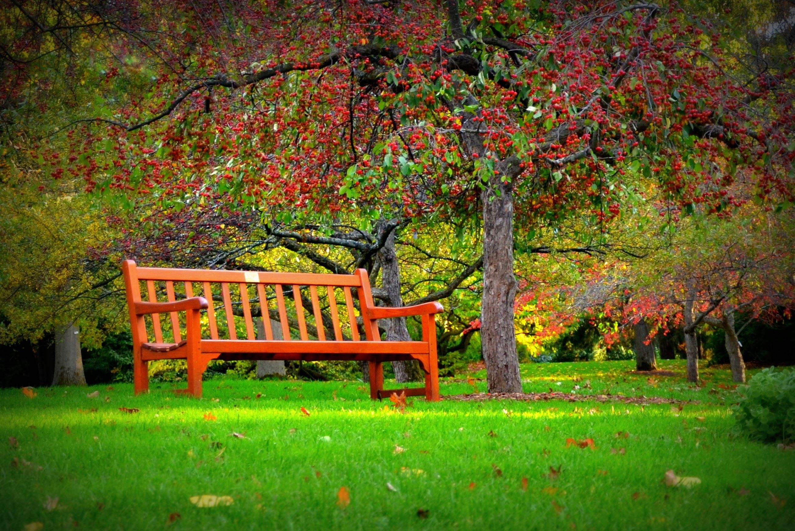 Image of a bench in a park under a tree