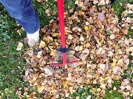 A foot and a rake in a pile of fall leaves