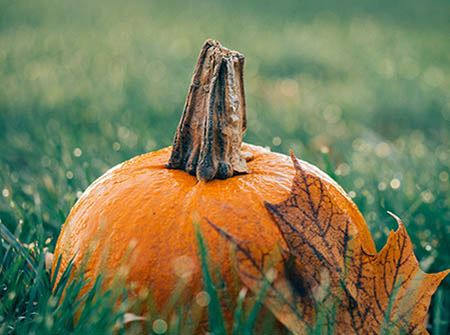 An orange pumpkin with a red leaf in green grass