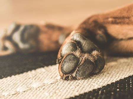 A large brown dog's feet lay on a brown and black rug