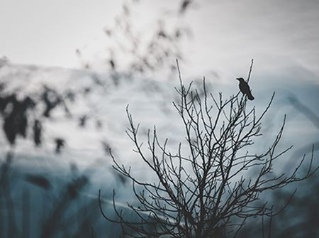 A black bird sits on a dark tree limb with a gray spooky sky